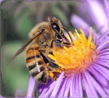 bee exterminator cape cod