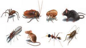 Type of Common Pests - Cape Cod Pest Pros