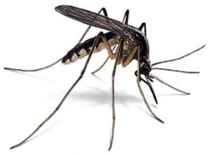 Mosquitoes can carry dangerous diseases, like EEE