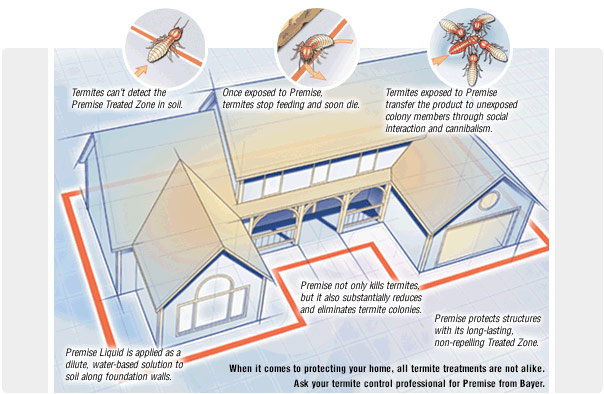 termite infestation and treatment on cape cod -Pest Pros