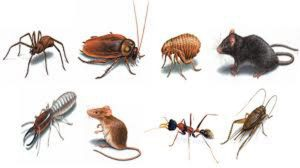 Type of Common Pests - Cape Cod Pest Pros
