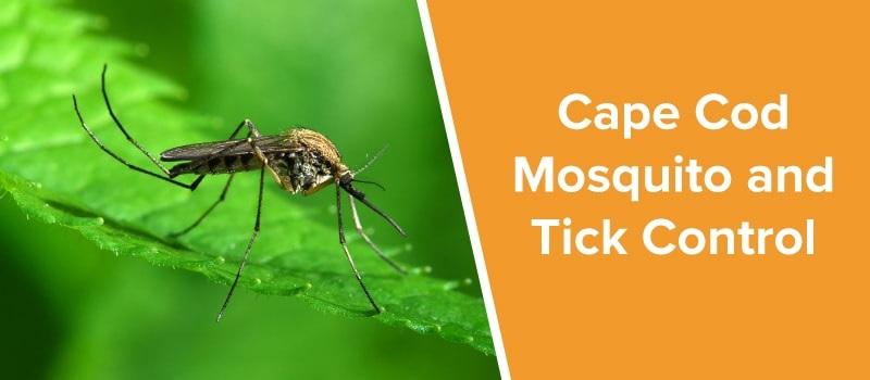 mosquito control Cape cod