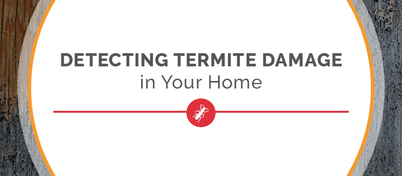 detecting termite damage