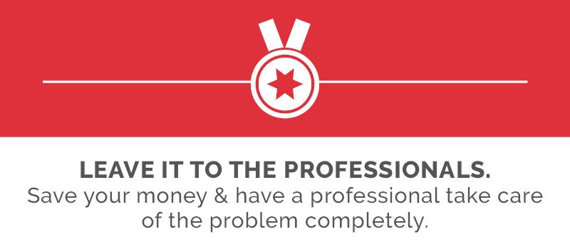 hiring termite professionals
