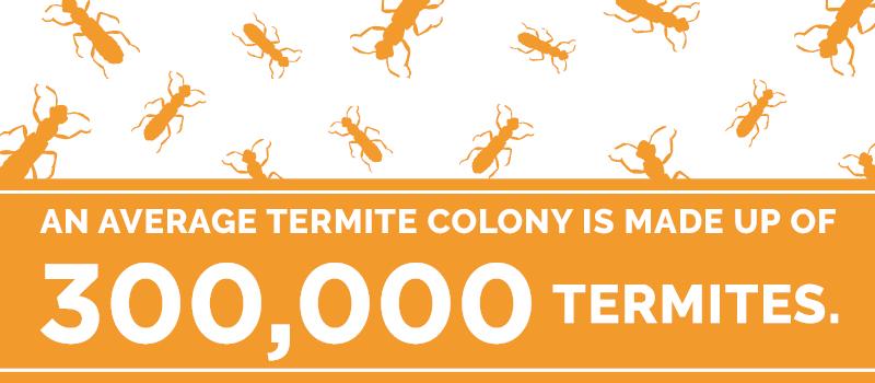 termite colony size