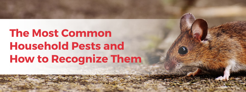 common house pests