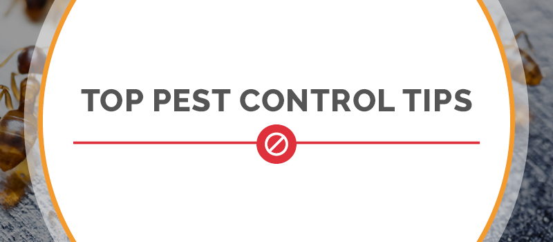 Top Pest Control tips