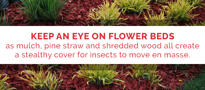 look in flower beds for pests