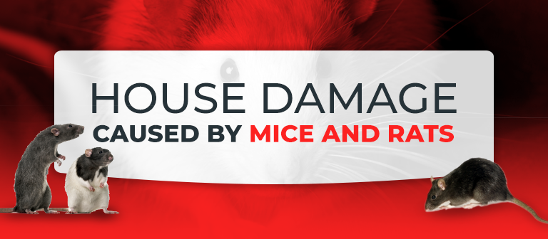 house damage caused by mice and rats