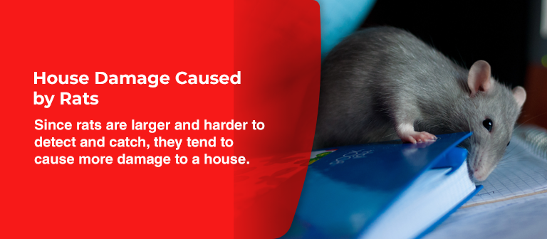 house damage caused by rats