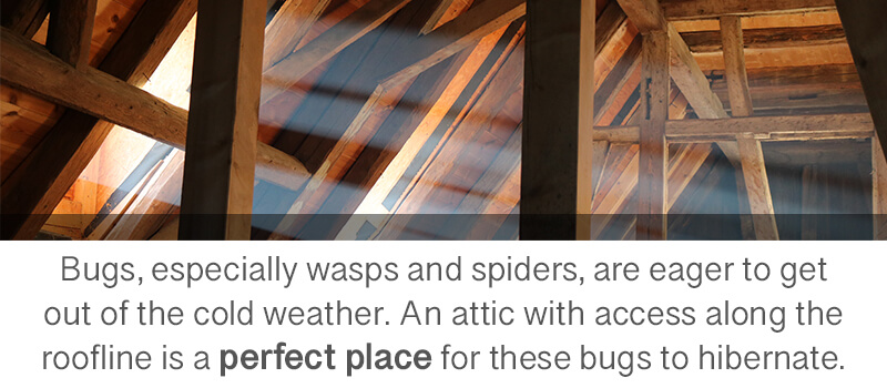 wasps-spiders-in-attic
