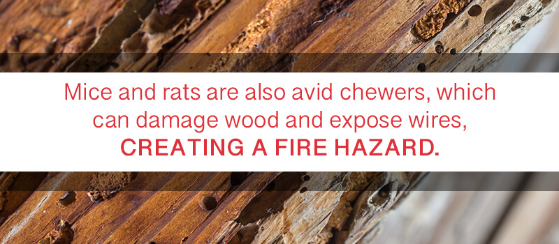mice-chewing-creates-fire-hazards