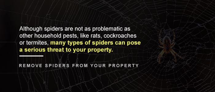 Why Remove Spiders From Your Property?