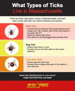 types of ticks found in massachusetts