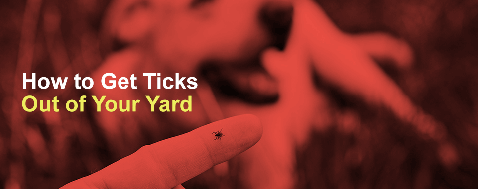 How to Get Ticks Out of Your Yard
