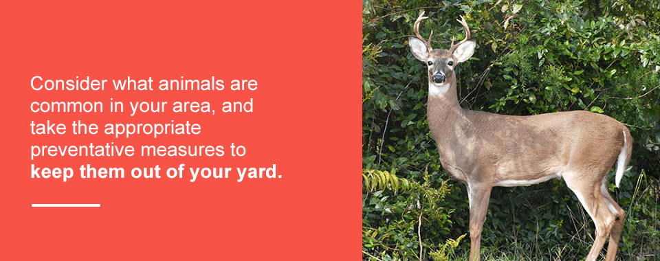 keep-wildlife-away-from-your-property