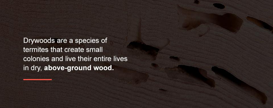 Druwood Termites