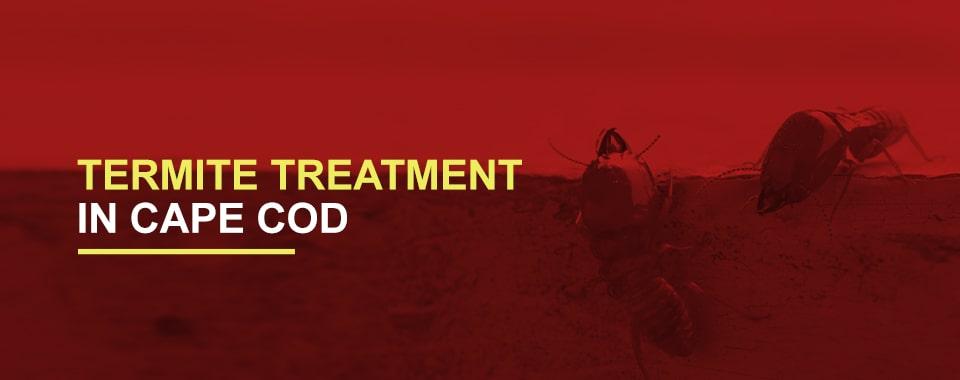 Termite-Treatment-in-Cape-Cod