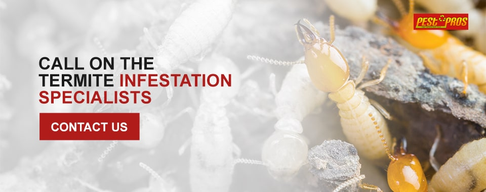 Call on the Termite Infestation Specialists