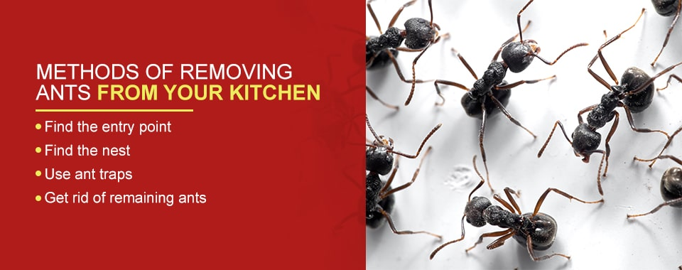 Methods of Removing Ants From Your Kitchen