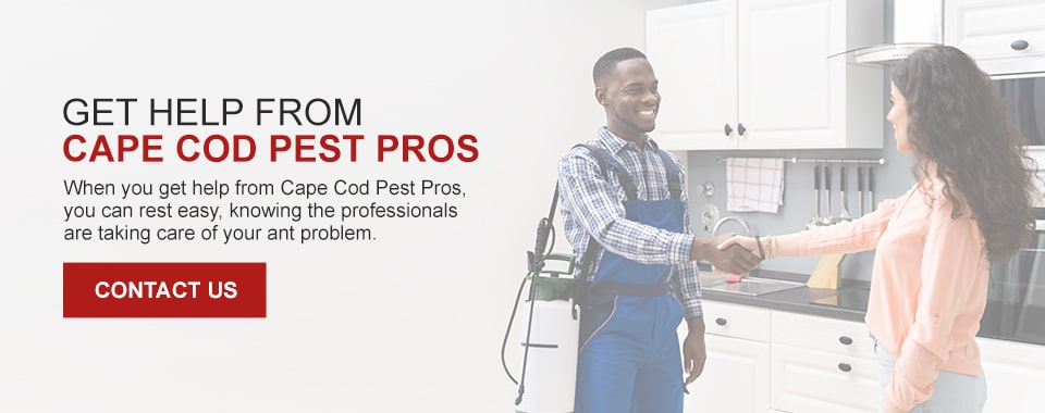 Get Help From Cape Cod Pest Pros